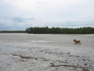 Sampson has the full run of Dog Beach | by nikoretro