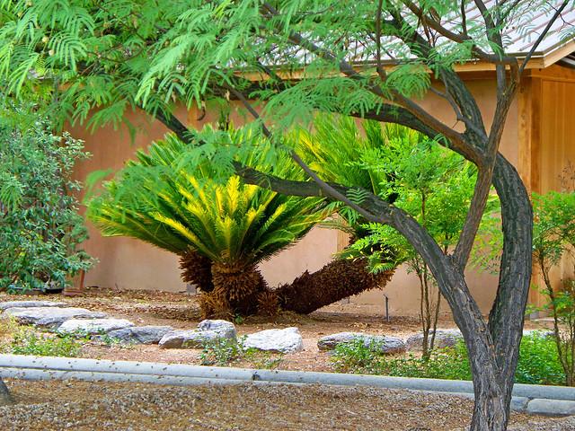 Tucson Botanical Gardens Interesting Tree