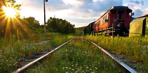 railroad sunset sun flower overgrown ma gold amber scenic olympus palmer historic caboose rails daisy rays 2009 railcars puffyclouds scottkelby e420 worldwidephotowalk goldenhourengine