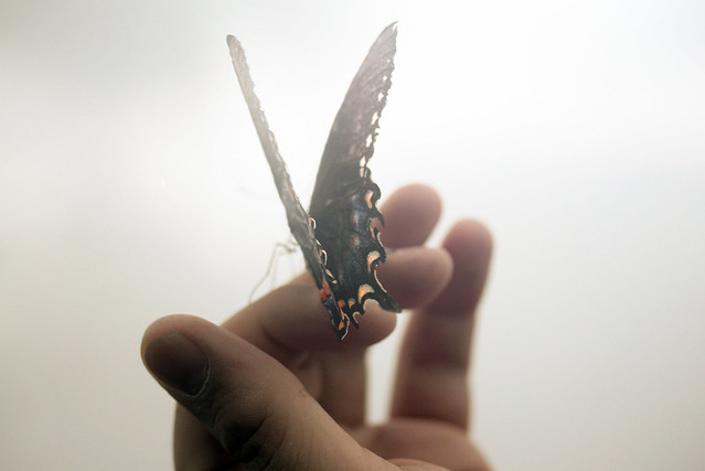 I will write peace on your wings ...