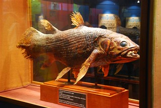 East London Museum Coelacanth | by Tourism Buffalo City - South Africa