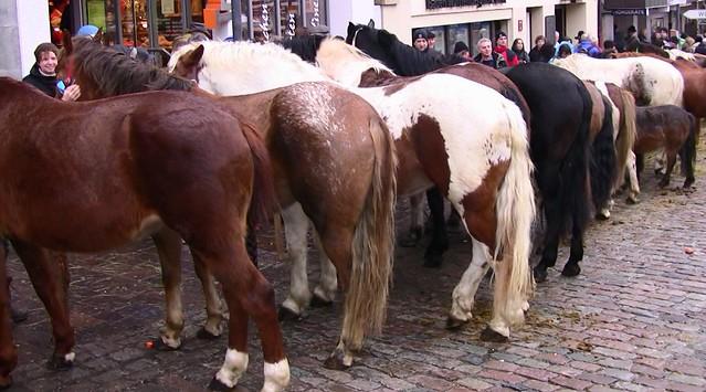 Leonberger-Pferdemarkt - mal von hinten in Reih und Glied