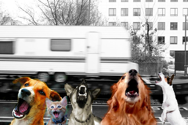 Les chiens aboient, et la caravane, que fait-elle ?