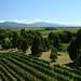 New Zealand / Franz Josef, Marlborough Region