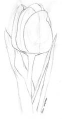 doodle week: tulips