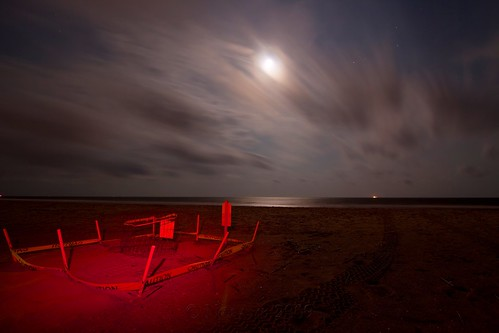 ocean longexposure red moon seascape lightpainting water night clouds danger stars landscape nc wire sand nest wind turtle tripod tracks northcarolina atlantic led tape fox caution eggs clutch raccoon gitzo loggerhead donotdisturb veryhot oakisland stayaway caswellbeach photomatix arcatech tokinaatx116prodx gt2531 dangeroustohumanspets habaneropepperpowder townofcaswellbeach seaturtleprotectionprogram