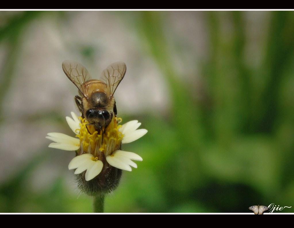 Kumbang dan bunga, | Mendongak ke awan, ingin sesekali ku ...