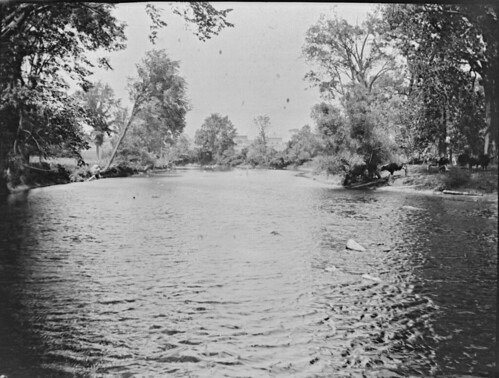 trees rivers 1900s