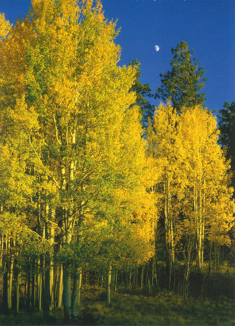 Apache-Sitgreaves National Forest Autumn Postcard