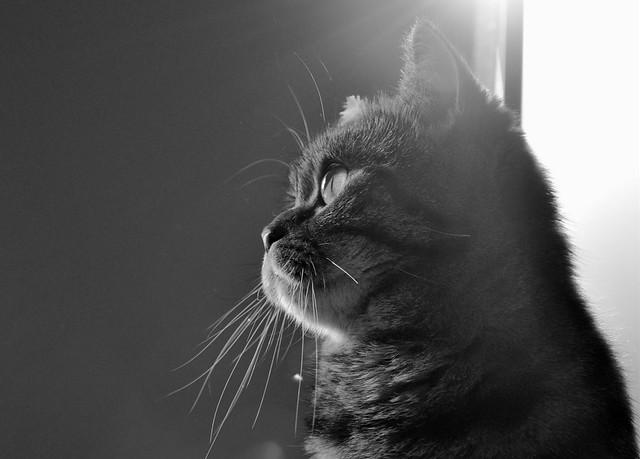 Ksenya & the Sun
