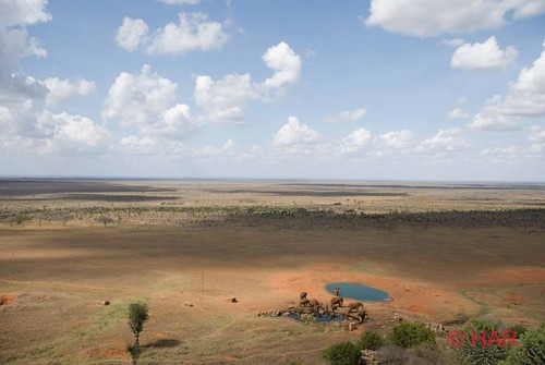 elephant game water nikon kenya reserve safari tsavo d80 platinumphoto impressedbeauty vosplusbellesphotos