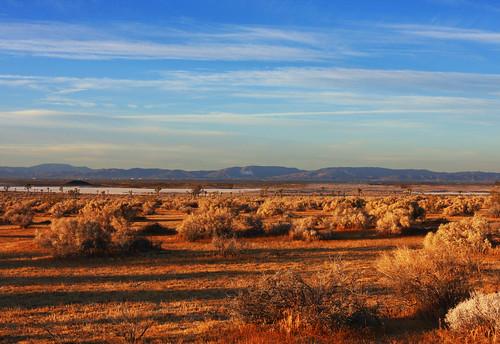 Mojave Desert National Preserve   by Rennett Stowe