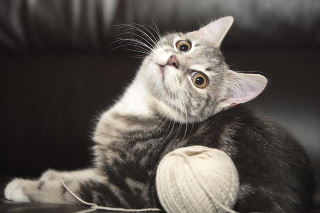 Katie's Kitty Kat 2