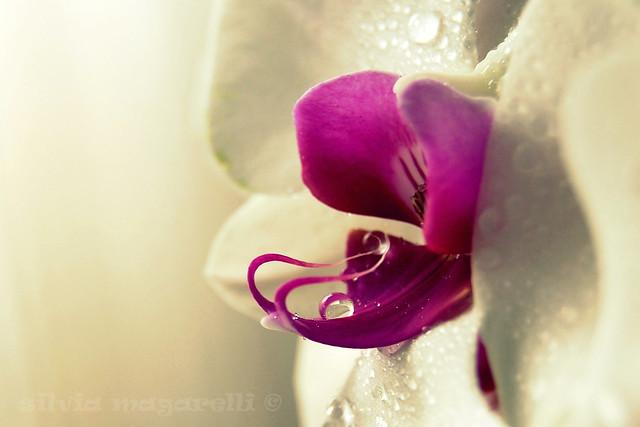 violet mood...