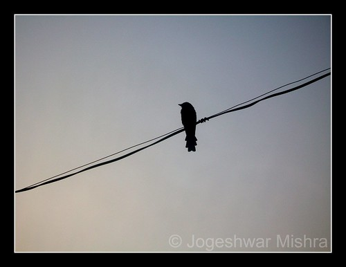 morning bird silhouette sunrise wire kodak jogeshwar