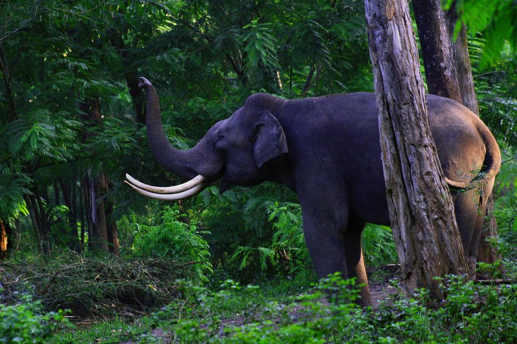 Elephant spotting in Muthanga Wildlife Sanctuary