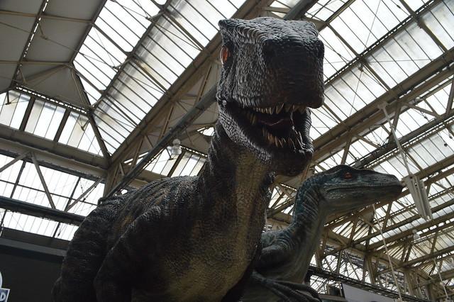 Raptors at Waterloo