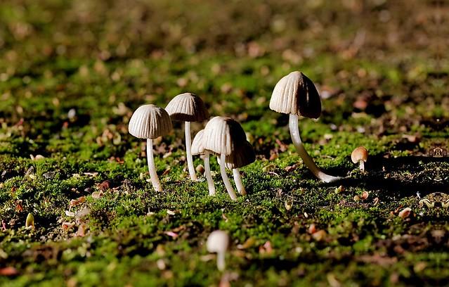 Pilzbabies 2 /  Baby mushrooms 2