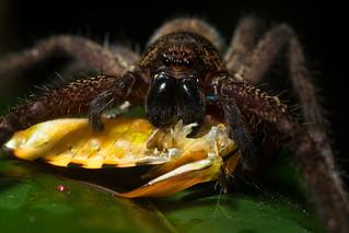Shieldbug Snack | by antonsrkn