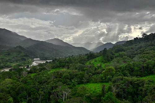permatree ecuador valle de las luciérnagas valledelasluciérnagas