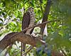 Sparrowhawk by aaardvaark