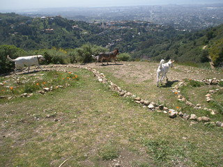 Barlow, Baila, and Daisy check out the view from the double-spiral open area. | by Doggy Lama Pet Care