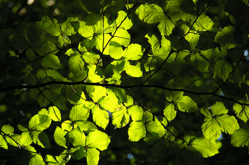 Fotosynteza / Photosynthesis
