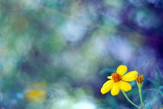 Yellow Flower | by ...-Wink-...