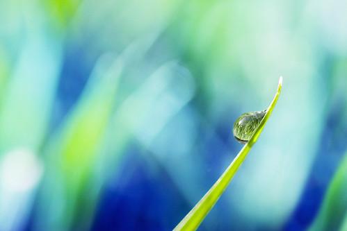 birthday blue green nature grass virginia bokeh v refraction bladeofgrass canon100mmmacro virgie waterdroplet ralphmarston canon40d imago2007 riczaf