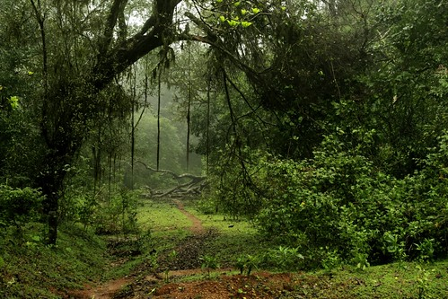 A view of Rain Forest