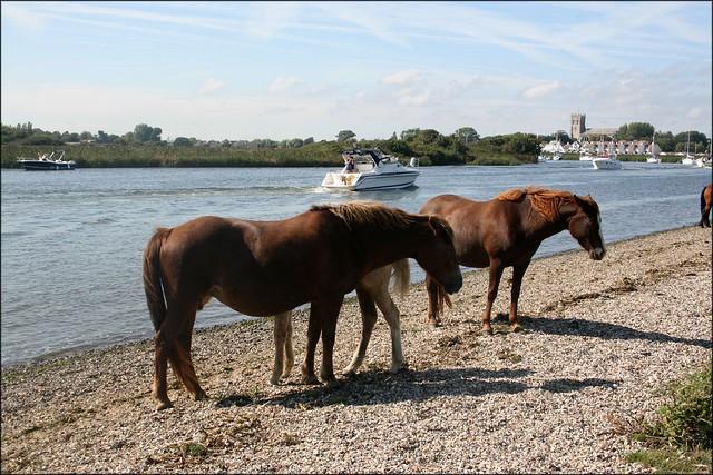 Horses beside the Stour