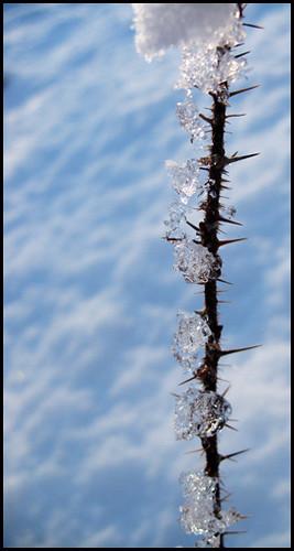 ice versus thorns