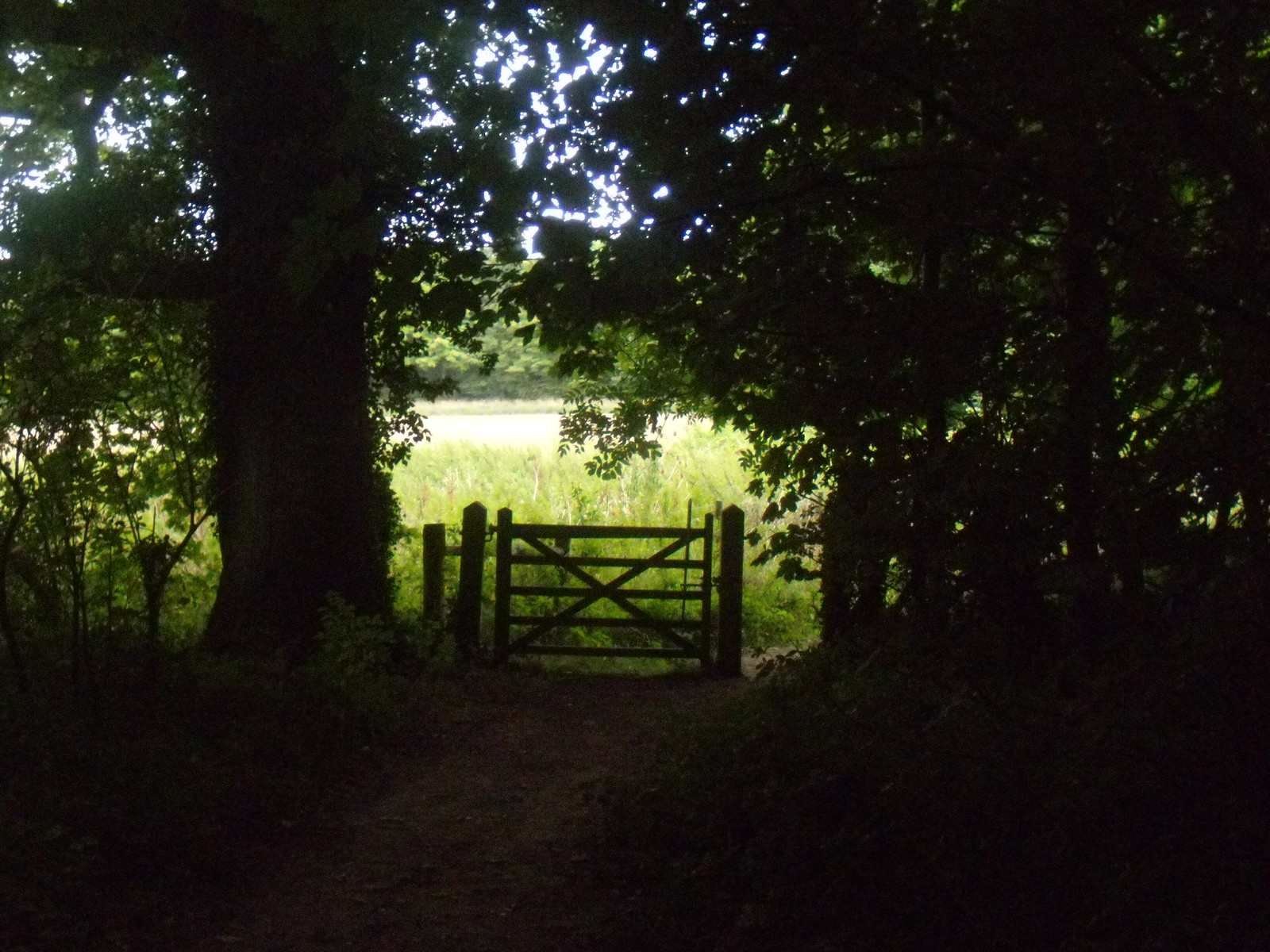 Gate out of the wood Hassocks to Brighton