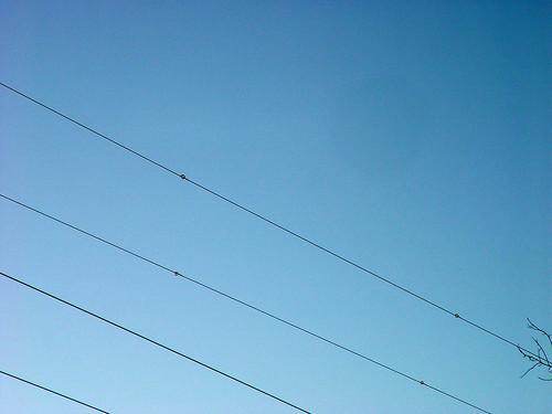 Wires with bird flight diverters