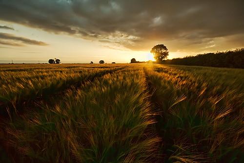 nottingham sunset barley landscape geotagged evening east nottinghamshire bridgford kneeton purefinder geo:lat=52999018 geo:lon=0951455