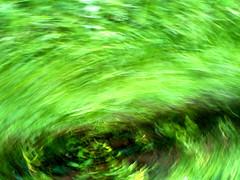 Green Tornado   by Gloson
