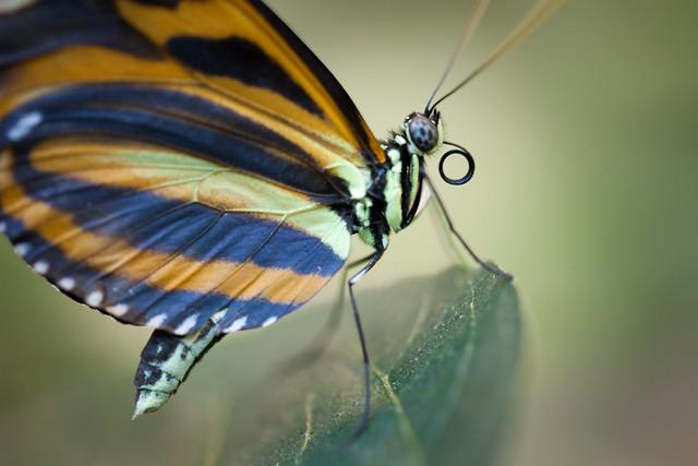Butterfly Palace 5934