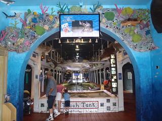 New Entry | by keywest aquarium