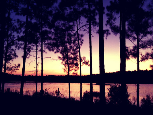 pink trees sunset lake nature pine forest purple gorgeous 3gs ocalanationalforest ocala iphone greatbigbeautifulworld