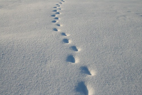 Footsteps in Snow | by Damork