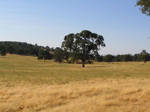california yosemite sierras sierranevada sierranevadas centralvalley
