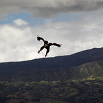 So, 31.05.15 - 12:00 - Águila Calva (Weisskopfseeadler)