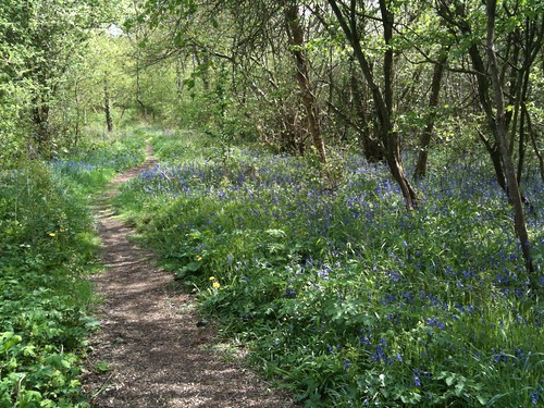 park wood trees apple sunshine bluebells woodland spring path buckinghamshire milton keynes 3gs howe iphone tattenhoe