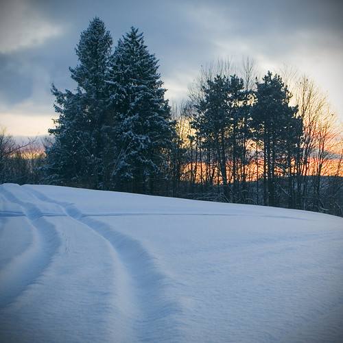 trees sunset snow vermont january montpelier 500x500