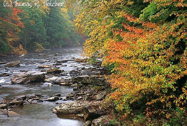 Cranberry River, Monongahela National Forest, West Virginia