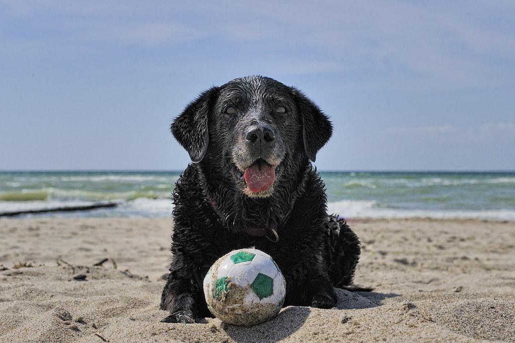 Strandterrorist Olivia :)