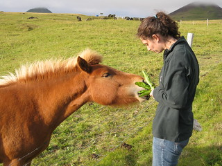 Feeding the pony dandelion greens | by C+H