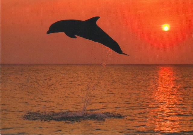 Mauritius Jumping Dolphin Postcard