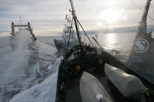 2009-02-06 Steve Irwin collides with Yushin Maru No. 3   by guano
