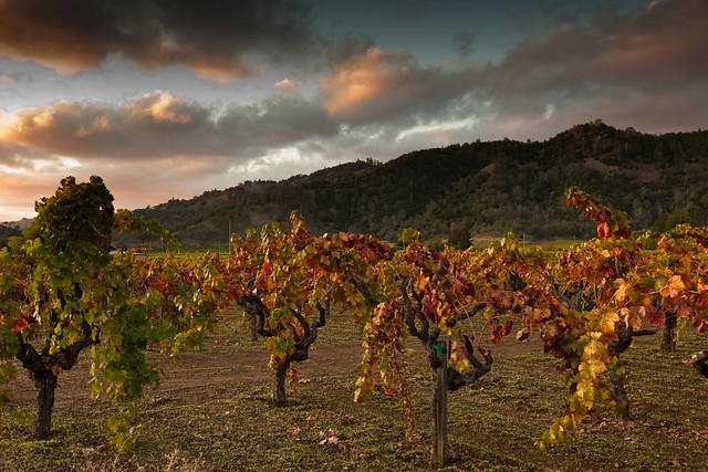 Napa Valley Fall Sunset